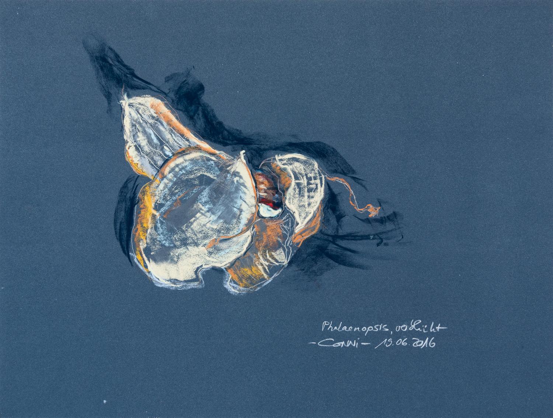 Phalaenopsis-verblüht